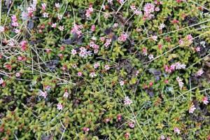 Obwohl in Miniaturausgabe, eine einzigartige Farb- und Pflanzenvielfalt
