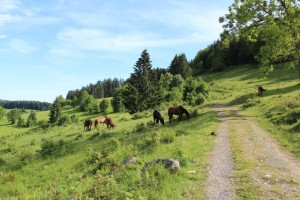 Pferdeweide bei Todtmoos Lehen