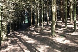 Todtmoos Rabenschlucht Wald