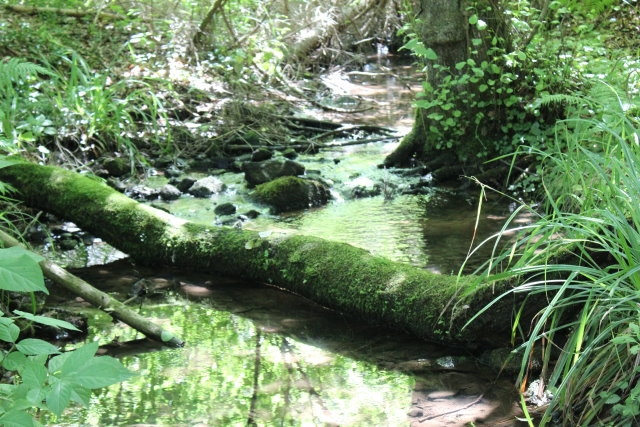 Der Wasserpfad im Sulzbachtal