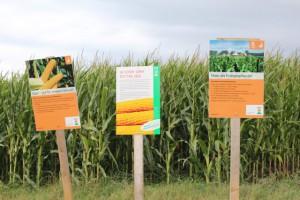 schluchtensteig maisfeld infotafeln