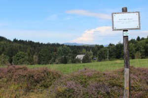 panoramaweg ibach feldbergblick