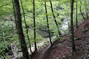 Schluchtensteig_2.Etappe_Schleifenbachwasserfall_4