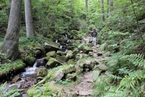Im Bannwald von St. Blasien