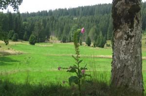 Schluchtensteig_4_Hochebene im Muchenwald