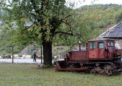 Albanien Schäfer mit Schafherde vor der Bar in Breg Lumi